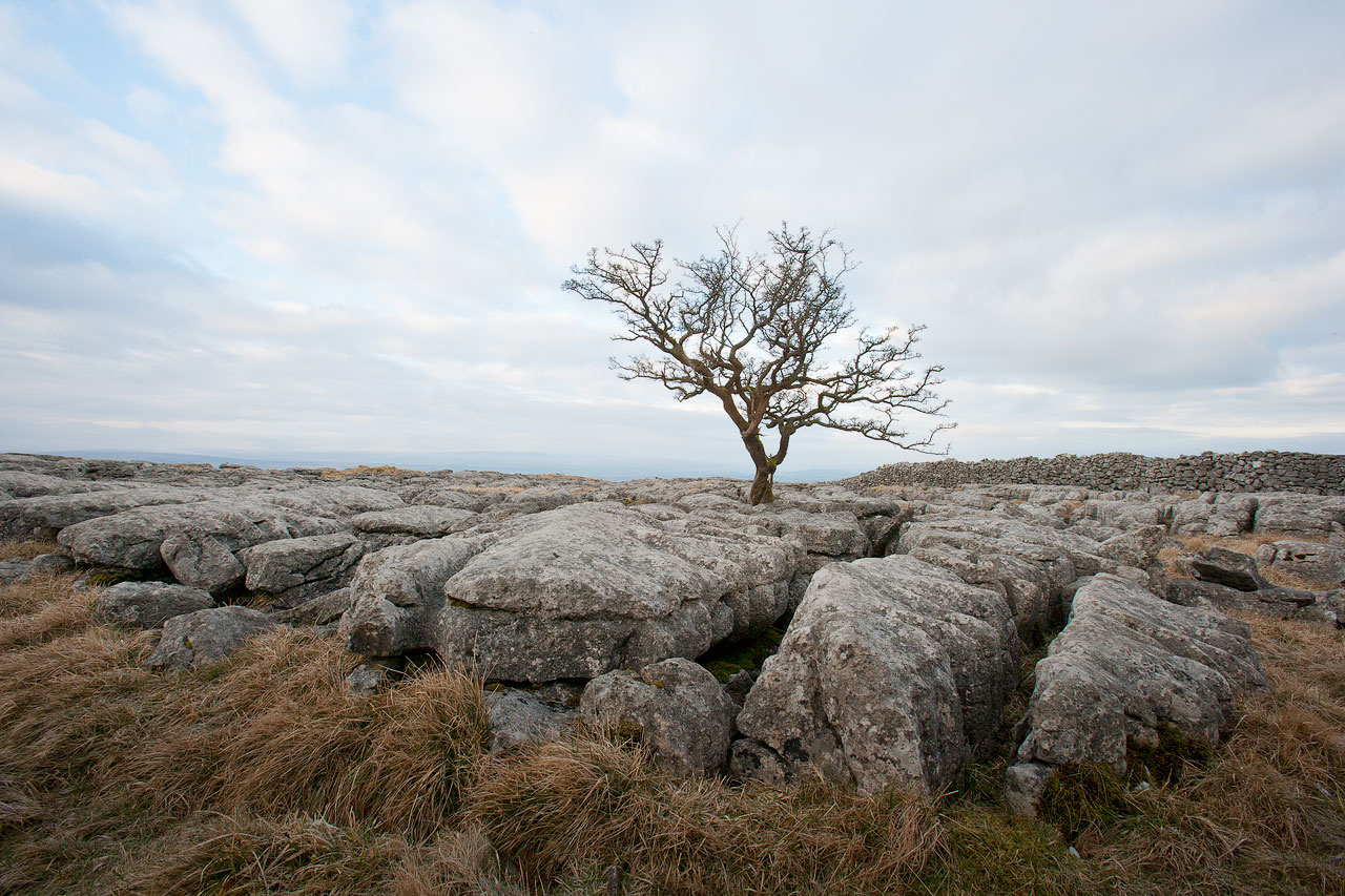 Tree at  Twistleton